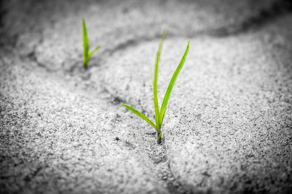 Grass 1913167 960 720