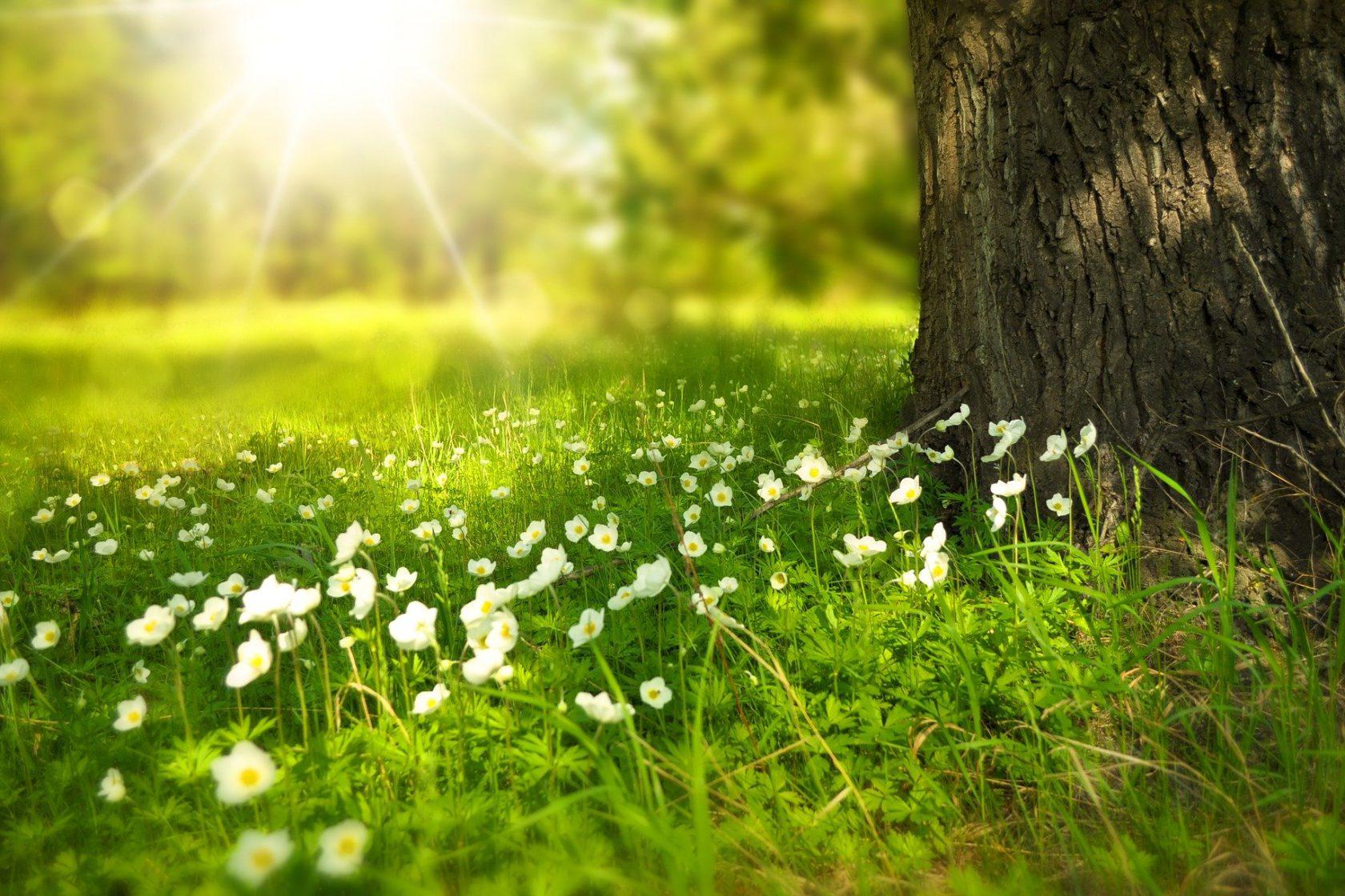 Spring 276014 1920